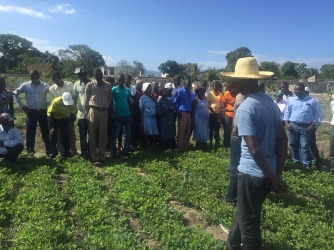 Farmers in the training learn about the different diseases to look out for on their peanut crops.