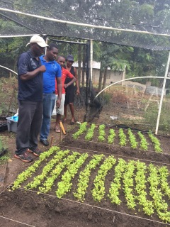Solkomyo visited each of the FAKO's members farms. This farmer is showing the team his tomato plants.